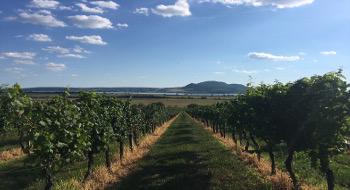 Wine tasting trip to Mikulov wine region