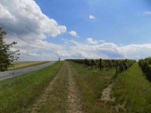 trail along vineyards
